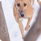 Adopt A Pet :: E's Gofar
