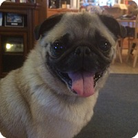 Adopt A Pet :: Jayda - Homer, NY