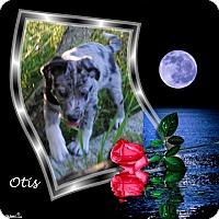 Adopt A Pet :: Otis - Crowley, LA