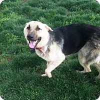 Adopt A Pet :: Natalie - Pleasant Grove, CA
