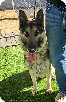 German Shepherd Dog Mix Dog for adoption in Phoenix, Arizona - Prince