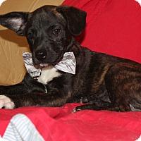 Adopt A Pet :: Basil (has been adopted) - Trenton, NJ
