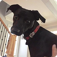Adopt A Pet :: Louie - Alpharetta, GA