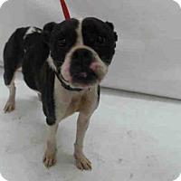 Adopt A Pet :: SAMANTHA - Orlando, FL