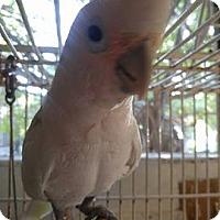 Adopt A Pet :: Delilah - Burleson, TX