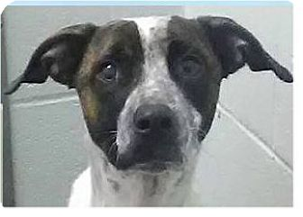 Hound (Unknown Type) Mix Dog for adoption in Springdale, Arkansas - Wallace