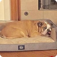 Adopt A Pet :: Penelope - Park Ridge, IL