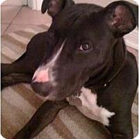 Adopt A Pet :: CHACHO - Houston, TX