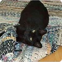 Adopt A Pet :: Mooglie - Montreal, QC