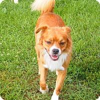 Adopt A Pet :: Marshall - Prole, IA