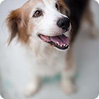 Adopt A Pet :: Leo - Reisterstown, MD