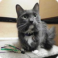Adopt A Pet :: Marie - Riverside, CA