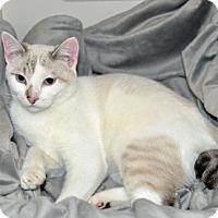 Adopt A Pet :: Iris - arthurdale, WV