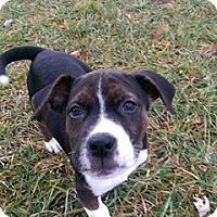 Adopt A Pet :: Eddie - ROME, NY