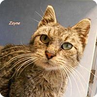 Adopt A Pet :: Zayne - Oskaloosa, IA