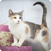 Adopt A Pet :: Clara - Little Rock, AR