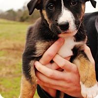 Adopt A Pet :: Eos $250 - Seneca, SC