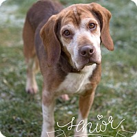 Adopt A Pet :: Chester - Drumbo, ON