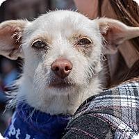 Adopt A Pet :: Katie - San Marcos, CA