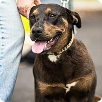 Adopt A Pet :: Jasmine  (See Video) - Munford, TN