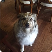 Adopt A Pet :: Milton - Elk River, MN
