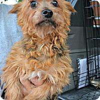 Adopt A Pet :: Jeffrey - PT ORANGE, FL