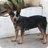 Adopt A Pet :: Sailor - 30 Pounds - Los Angeles, CA