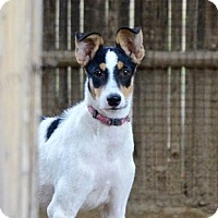 Adopt A Pet :: TINY - Wonder Lake, IL