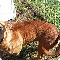 Adopt A Pet :: Truman meet me 9/16 - Manchester, CT