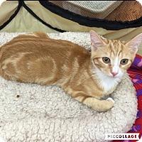 Adopt A Pet :: Hayden - Sarasota, FL