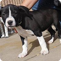Adopt A Pet :: Baby Jaden-Adoption Pending - Rockville, MD