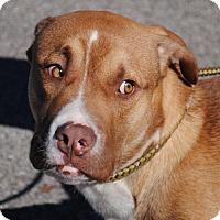 Adopt A Pet :: Adam - Anniston, AL