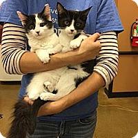 Adopt A Pet :: Valerie & MacKenzie - Rocklin, CA