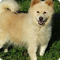 Adopt A Pet :: Jellybean - Vacaville, CA