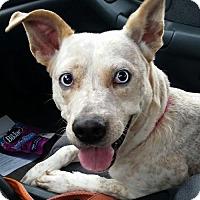 Adopt A Pet :: Bosco - Tonawanda, NY