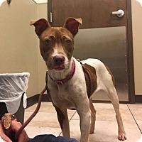 Adopt A Pet :: MK - Jacksonville, FL
