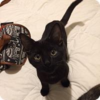 Adopt A Pet :: Milo - San Francisco, CA