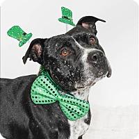 Adopt A Pet :: Meryl - San Luis Obispo, CA