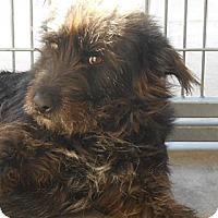 Adopt A Pet :: Camden - Phoenix, AZ