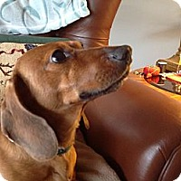 Adopt A Pet :: Hank  adopted - Nine Mile Falls, WA