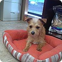 Adopt A Pet :: Frodo - Colorado Springs, CO