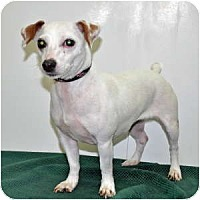 Adopt A Pet :: Haylee - Port Washington, NY