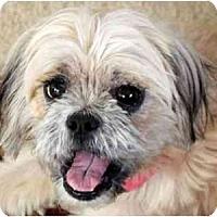 Adopt A Pet :: Sally Anne-VA - Suffolk, VA