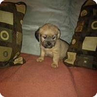 Adopt A Pet :: Dustin - Marlton, NJ