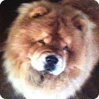Adopt A Pet :: Mia - Bristol, TN
