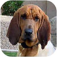 Adopt A Pet :: Beatrice - Phoenix, AZ
