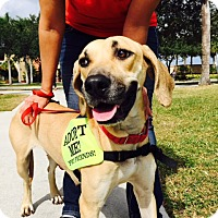 Adopt A Pet :: Shelby - Jupiter, FL