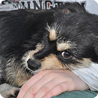 Adopt A Pet :: Anna - Tumwater, WA