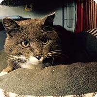 Adopt A Pet :: Dozier - Alden, IA