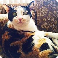 Adopt A Pet :: Pico - Mesa, AZ
